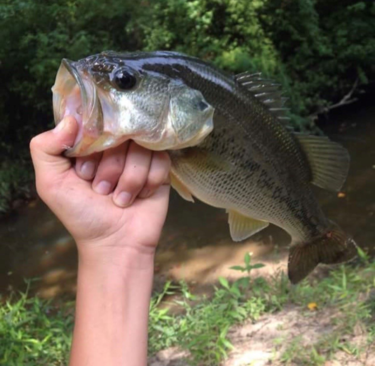 From Impaired Water to Catch and Release at Creekside Park